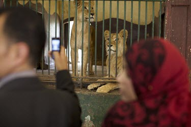 Photo: Mark Nozeman/ Cairo/ Egypt/ families and friends joining for a free day at Giza Zoo while.../Mark Nozeman