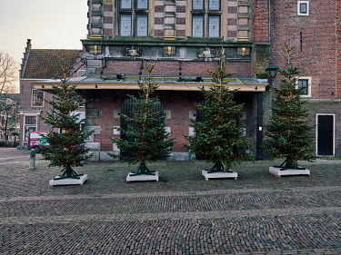 Europe, The Netherlands, Noord-Holland, Alkmaar, Pre Christmas COVID-19 Lockdown, Christmas trees.../Miquel Gonzalez