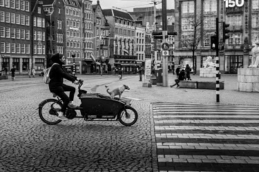 Amsterdam: dog in a cargo bike 'Bakfiets'/Unai Risue�o