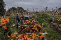 Marigold Flower Harvest